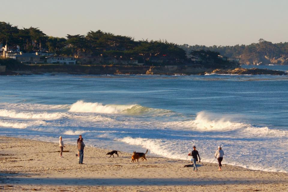 people and dogs walking on Carmel Beach